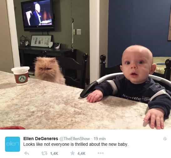 stomme kat