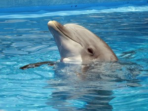 dolphin-597527_640