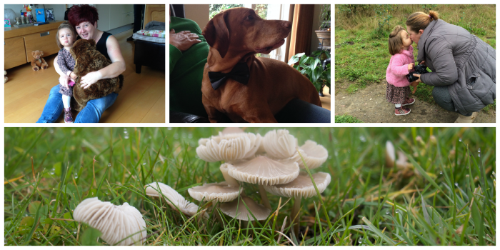 paddenstoelen jacht