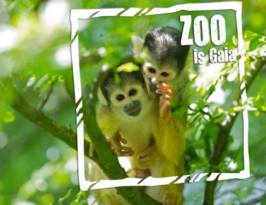 Gaiazoo review dierentuin