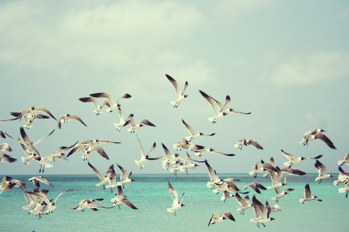 seagulls-815304_1280