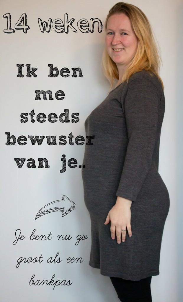 zwanger-14-weken