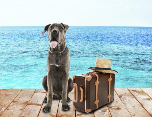 diervriendelijke vakantiehuizen