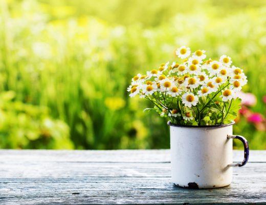 Dingen die ik wil doen deze lente