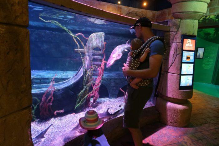 gardaland sealife